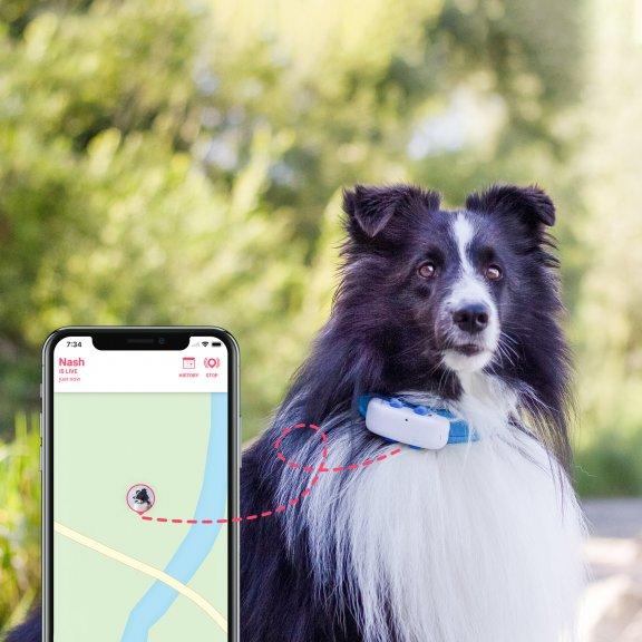 Tractive GPS Dog LTE – koiran GPS-paikannin, kuva 7