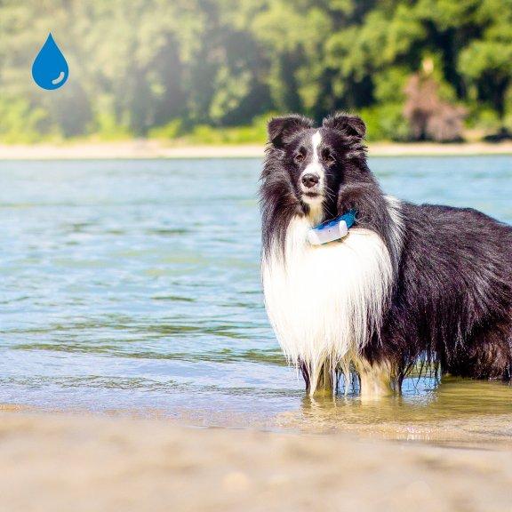 Tractive GPS Dog LTE – koiran GPS-paikannin, kuva 6