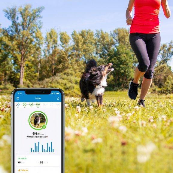 Tractive GPS Dog LTE – koiran GPS-paikannin, kuva 8